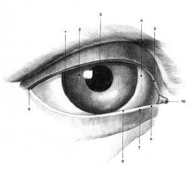 schema-definition-oeil
